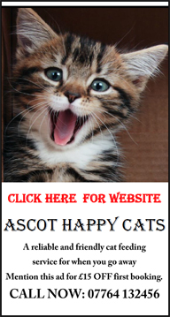 Happy Cats | Cattery | Ascot | Bracknell