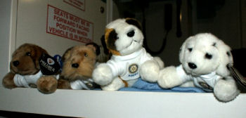 ascot rotary cuddly toys for traumatised children